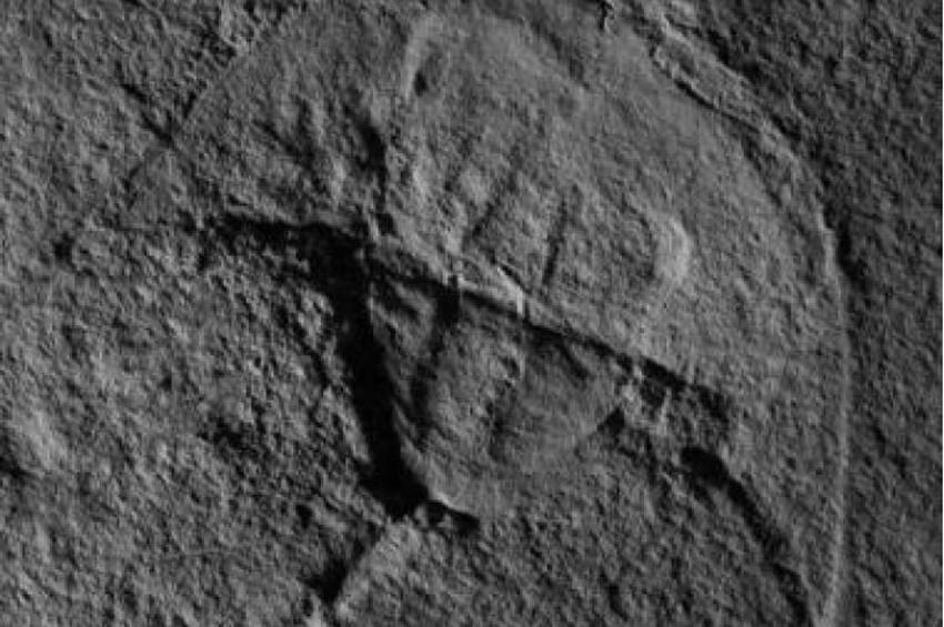 Darth Vadere benzeyen fosil bulundu