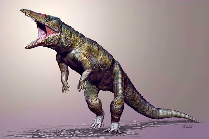 Türkiyede dinozor timsah fosili bulundu