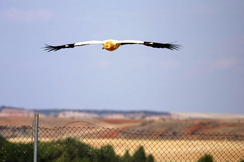 Kuş gözlemcileri tek tek Adanadan geçen kuşları saydı