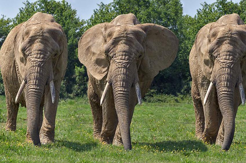Sri Lankada filler 19 avcıyı öldürdü