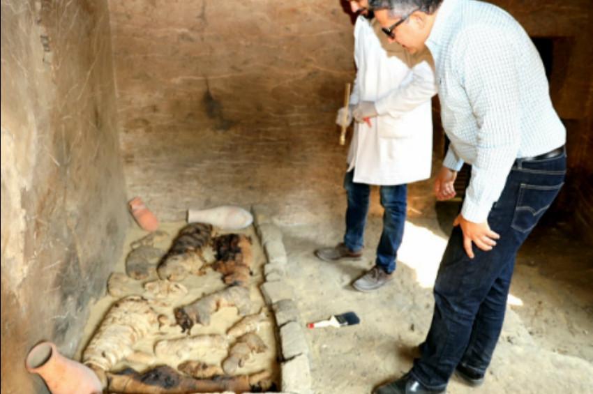 Mısırda kedi mezarlığı ve hayvan mumyaları bulundu