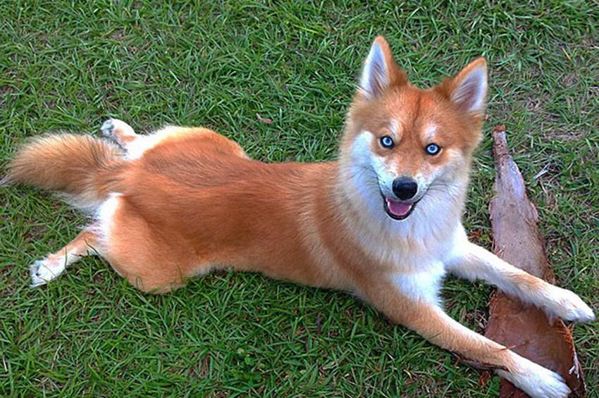 Padişah İkinci Abdülhamit'in polis köpeği