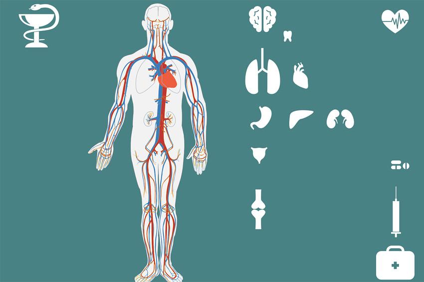 İnsanda yeni organ keşfedildi: interstisyum