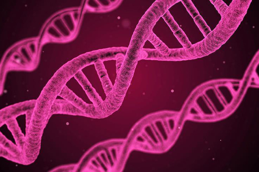 DNAnın bükülmüş düğüm şekli keşfedildi