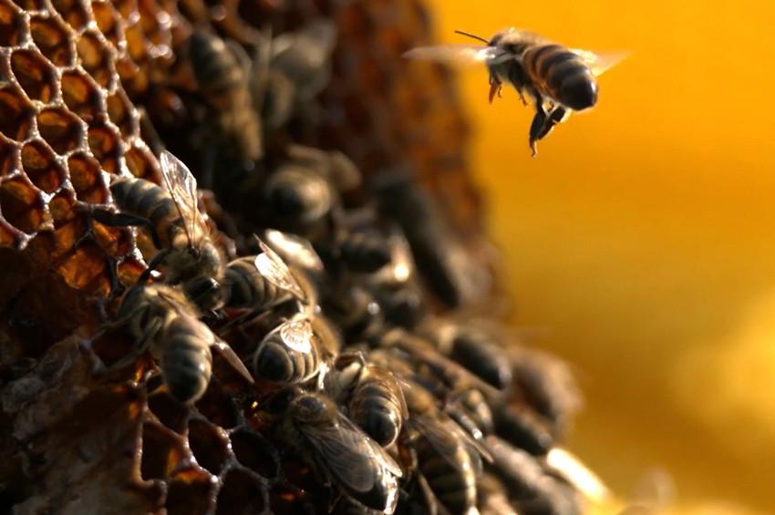 Arıyı Unutma kampanyası