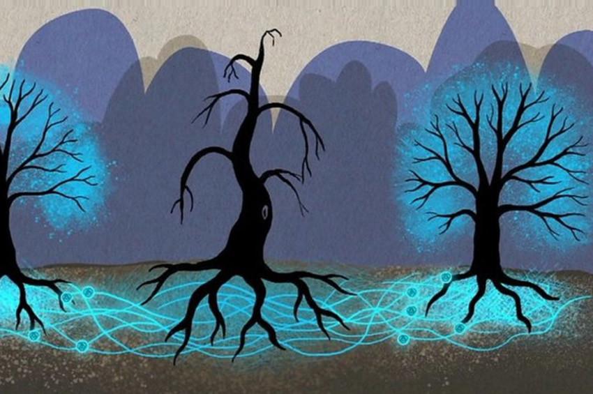 Ağaçların gizli ileştişim ağı var