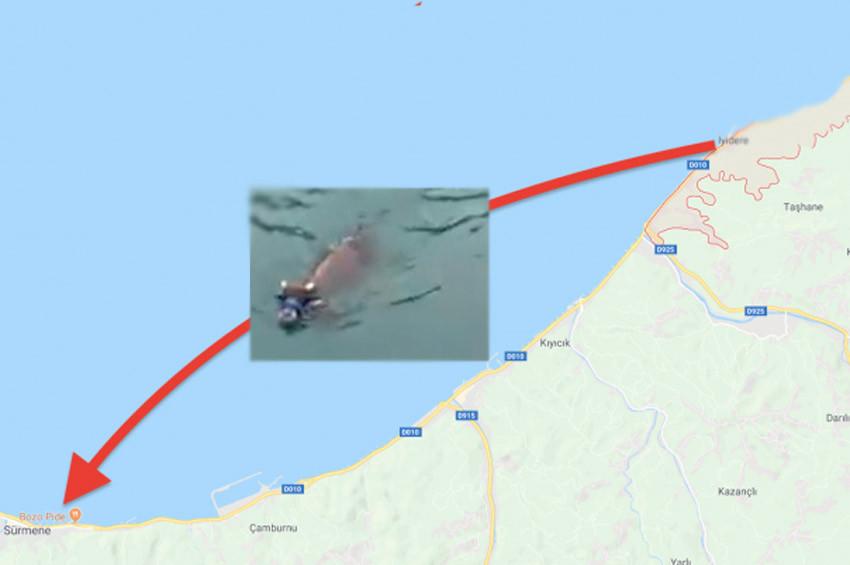 Rizede denize atlayan kurbanlık dana Trabzondan çıktı