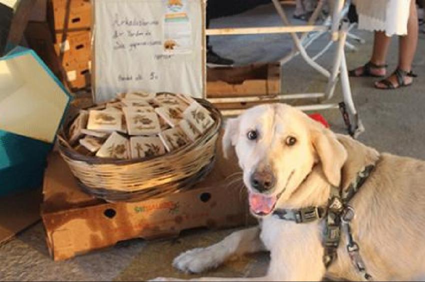 Sokak hayvanları yararına festival düzenlendi