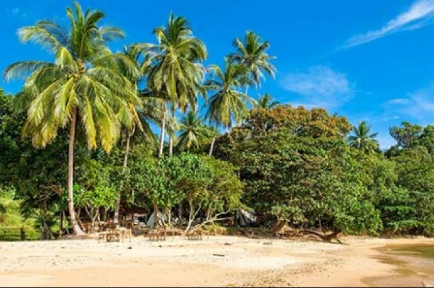 Pasifik'te Hindistan cevizi ağaçları tehlikede