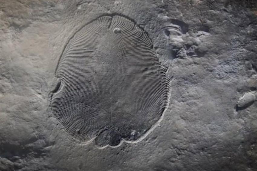 En eski hayvan fosili bulundu, 70 yıllık gizem çözüldü