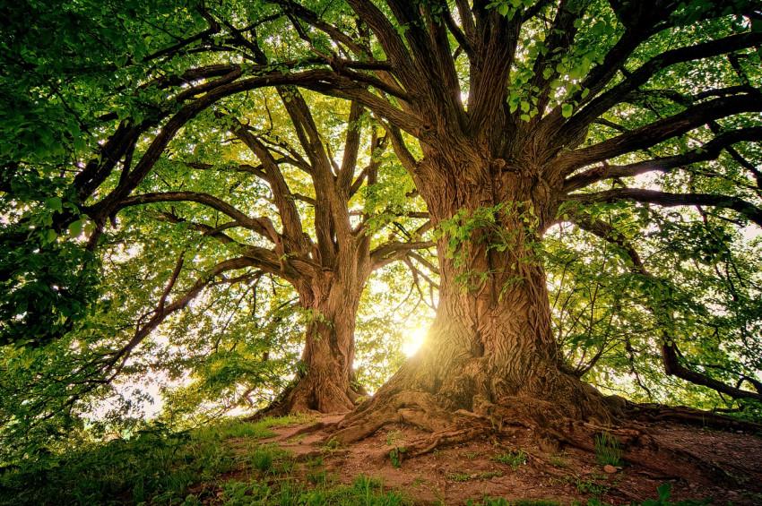 Dallara değil  ağacın gövdesine bakmayı başarın