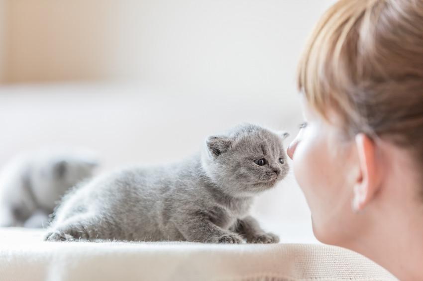 Kedilerden bulaşan körleştirici parazit: Toksoplazma