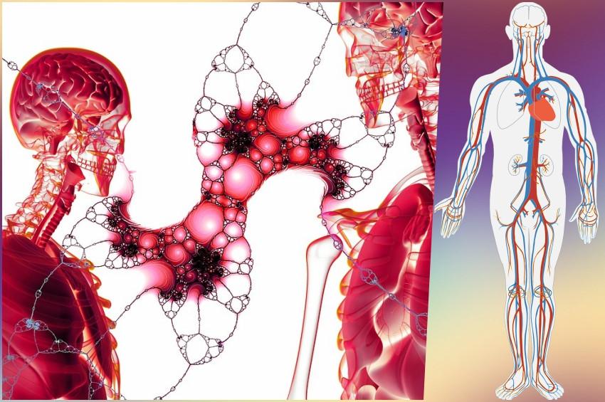 İnsan vücudunda yeni bir kan sistemi keşfedildi