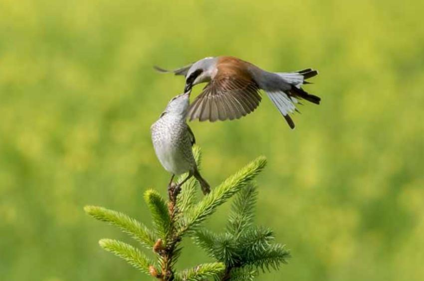 Türkiyede Üreyen Kuşların haritası çıkarıldı