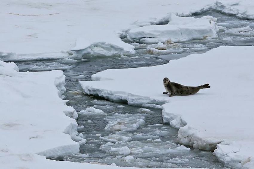 Buzlar eriyor tonlarca metan gazı açığa çıkıyor