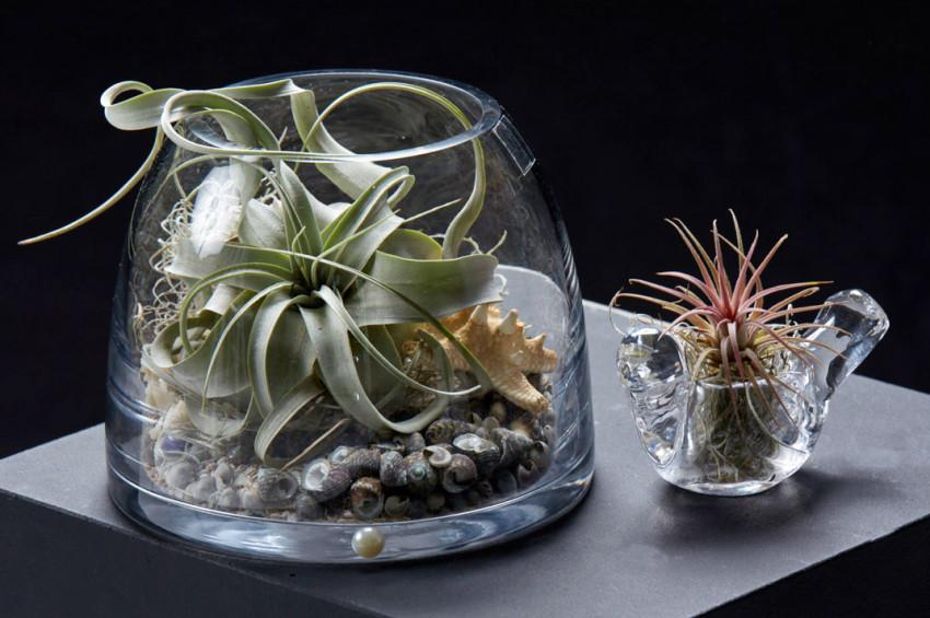 İş yerlerinizde bitki yetiştirmenin 5 yararı