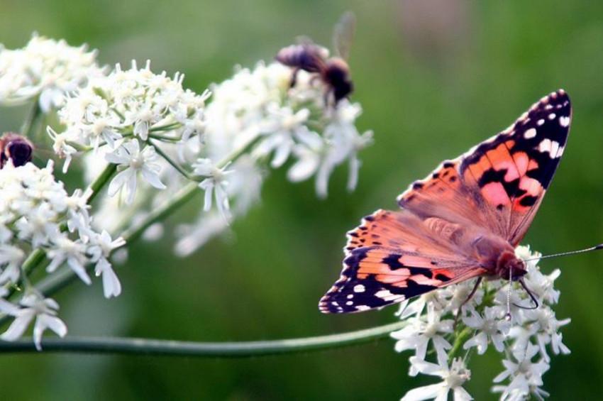 Böcek türlerinin tükenişi  eko sistemleri çökertebilir