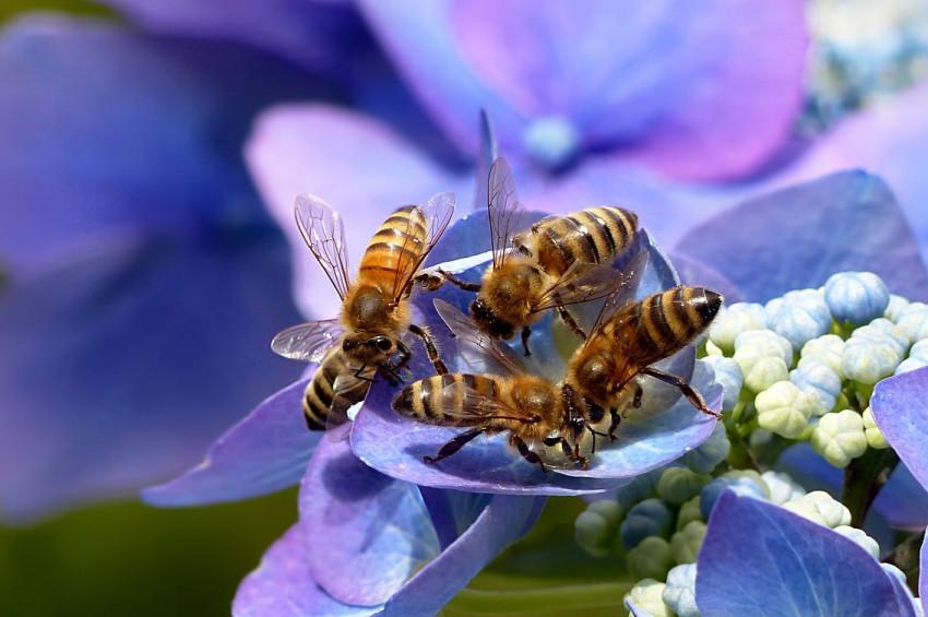Bir kadının gözünden canlı dört arı çıktı