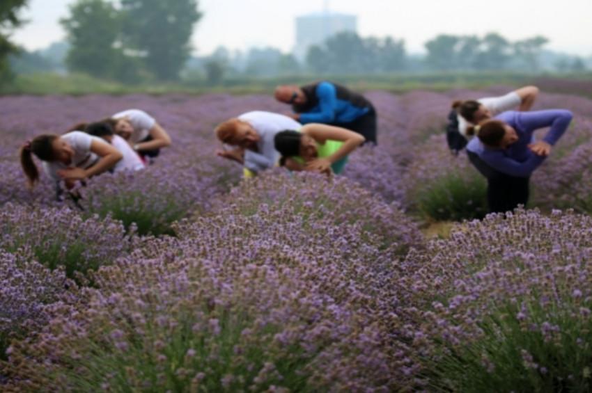 Kanola tarlasında yoga yaptılar