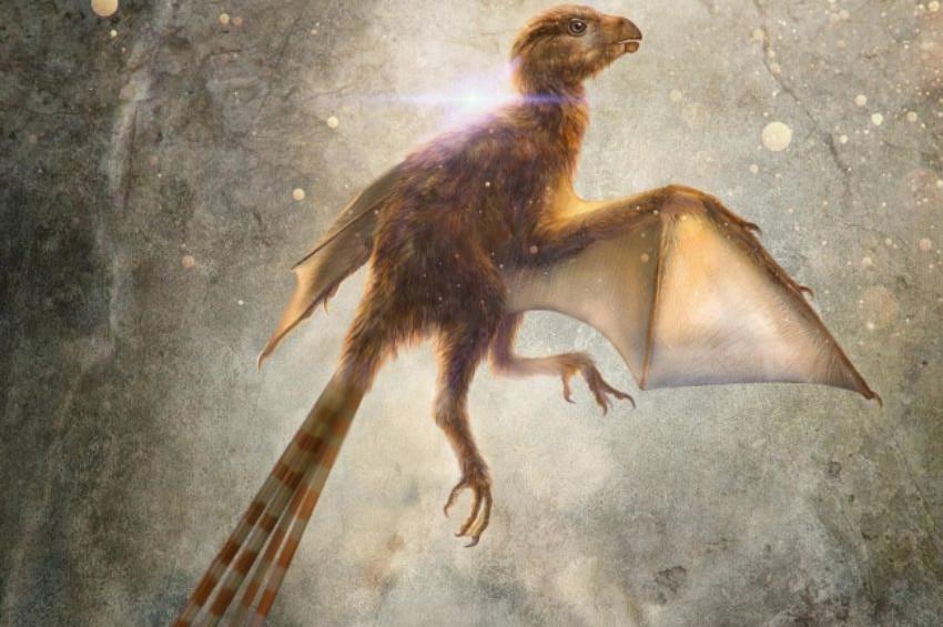 63 milyon yıllık yarasa kanatlı dinozor keşfedildi