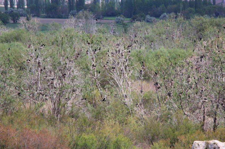 Kuş Cenneti göçmen kuşların sesleriyle şenlendi