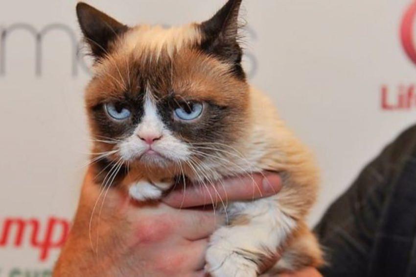 Dünyaca ünlü somurtkan kedi öldü