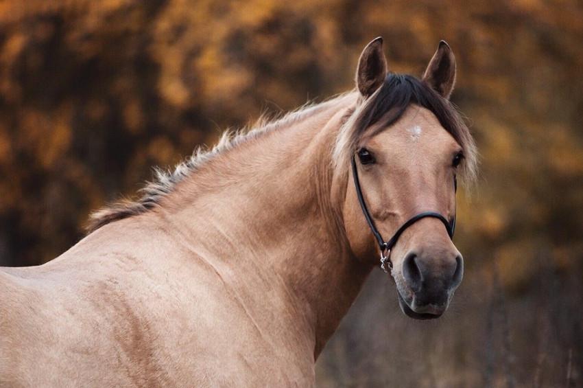 Atlar neden ayakta uyur?