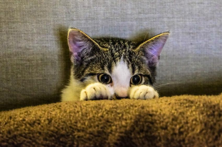 Kedisinin tırnaklarını sökenlere kötü haber