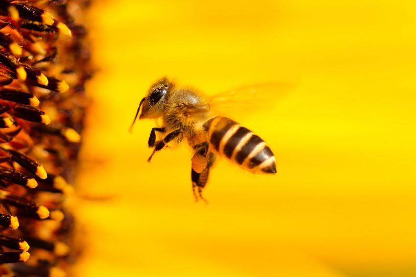 Arı sokması ve böcek ısırmasına karşı bilinmesi gerekenler