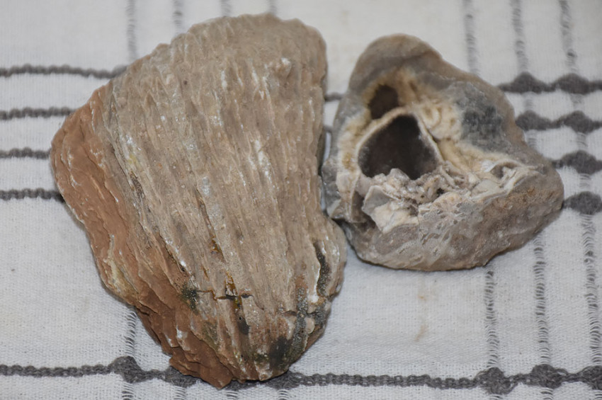Adıyamanda çok sayıda fosil bulundu