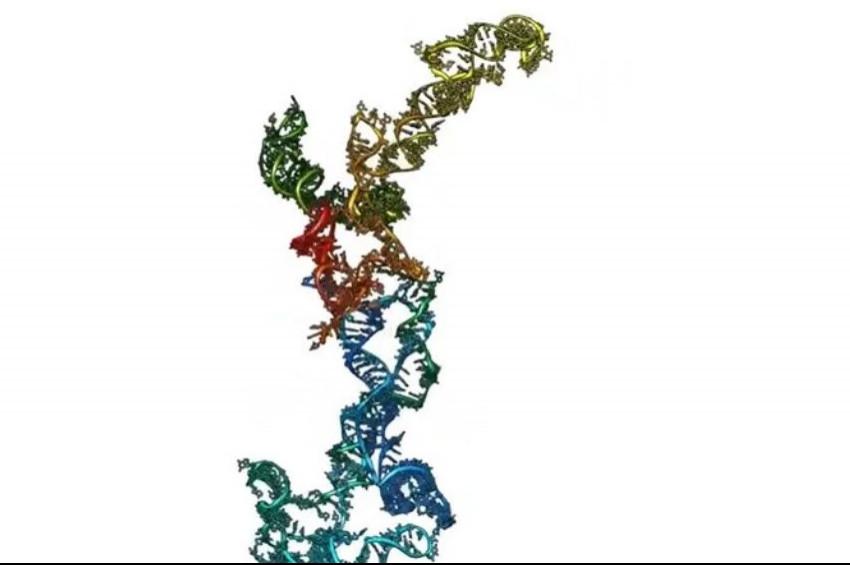 RNA molekül yapısının 3 boyutlu görseli oluşturuldu