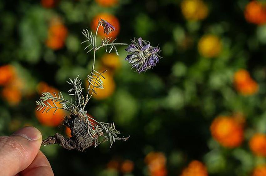 Mide sağlığı için 7 öneri 3 bitki çayı formülü
