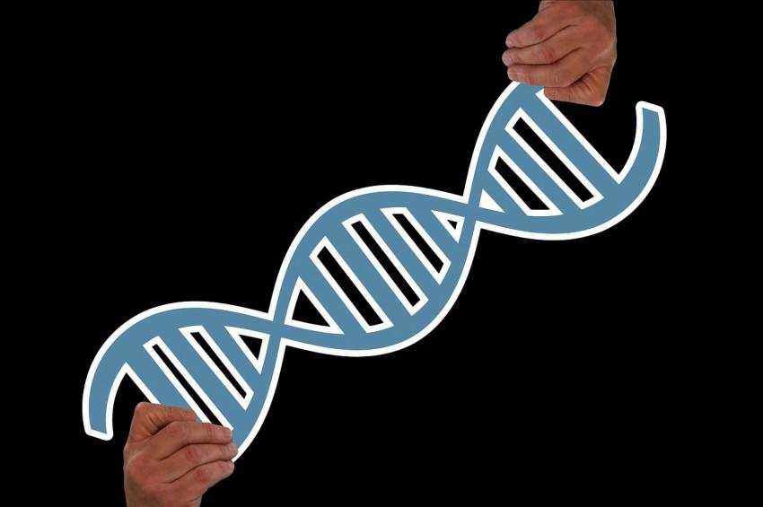 DNA yeniden kodlanıp, sarmal sayısı artırılabilir mi?