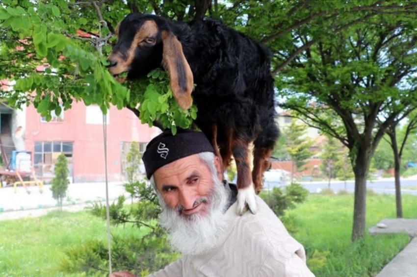 Sırtında keçi otlatan adam