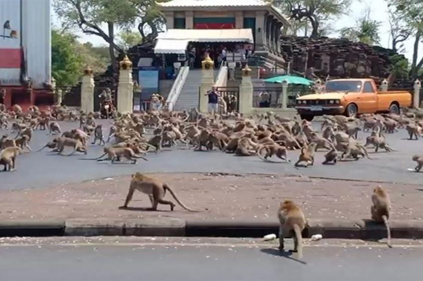 Koronavirüs hastalarının kan örneklerini maymunlar çaldı!