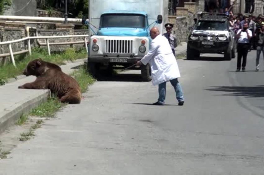 Azerbaycanda boz ayı sokaklarda dolaştı
