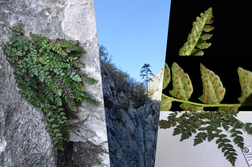 Karadenizde yeni bir bitki türü keşfedildi