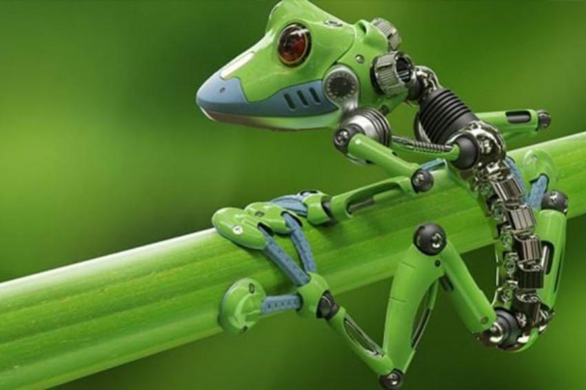 Canlı robot Xenobots ile tanışmaya hazır olun