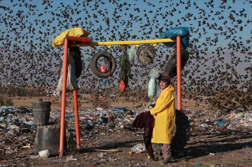 Çevre kirliliği 13 milyon türü tehdit ediyor