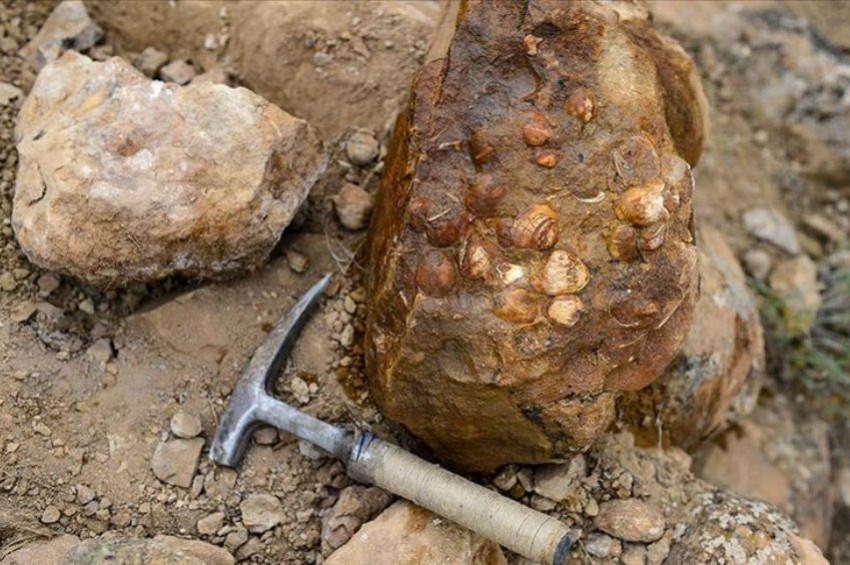 Iğdırda bitki ve midye fosilleri bulundu