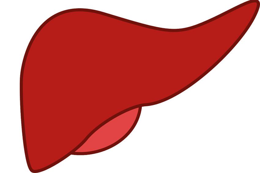 Karaciğer metastazı sinsi tehlike: