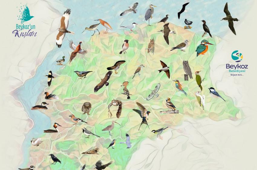 Beykoz'un Kuşları ve Tabiat Alanları kitaplaştı
