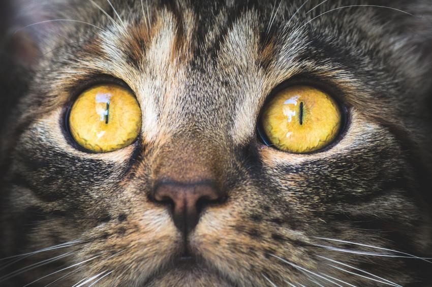 Çok sayıda kedi koronovirüs taşıyor olabilir