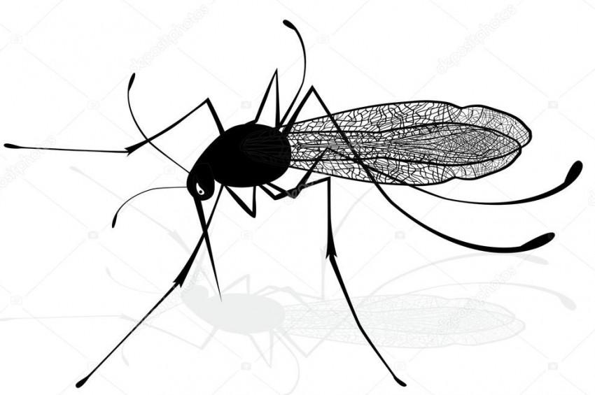 At ve inekleri öldüren dev sivrisinekler korkutuyor