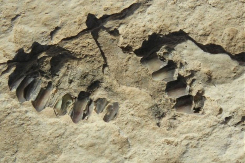 Arap Yarımadasında 120 Bin Yıllık İnsan Ayak İzleri Keşfedildi