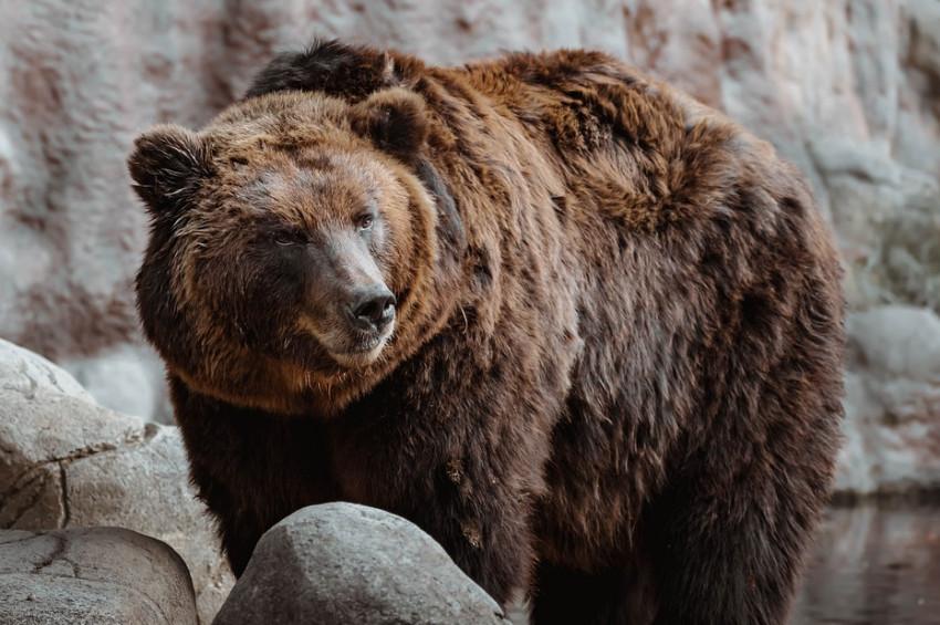 Karsta  erik toplayan vatandaşa ayı saldırdı