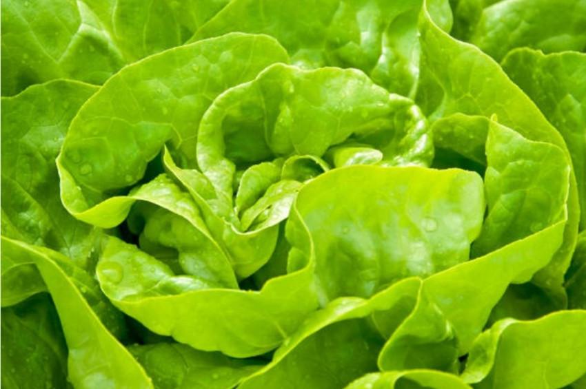 Gıda zehirlenmesi belirtileri nelerdir ve neler yapılmalı?
