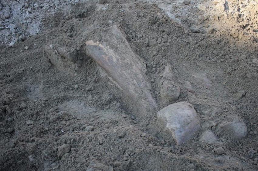 Amasyada mamut fosili bulunduğu iddiası