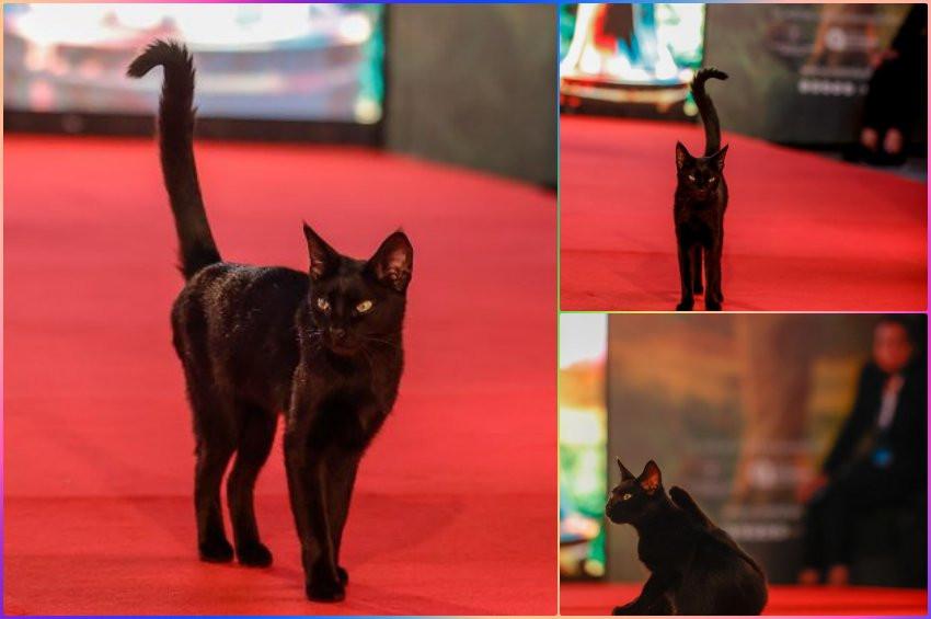 Altın Portakalın sıradışı yıldızı: Kara Kedi