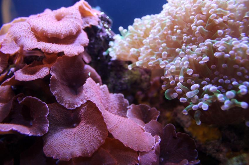 Küresel ısınmanın gözden uzak kurbanları: Mercanlar